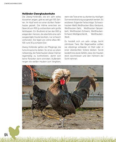 Zwerghühner: Ideale Tiere für jeden Garten - 12