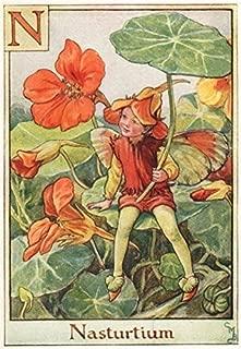 N = Nasturtium Fairy by Cicely Mary Barker. Alphabet Flower Fairies - c1934 - old print - antique print - vintage print - Flower Fairies art prints