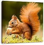 Eichhörnchen mit Nuss, Format: 40x40 auf Leinwand, XXL