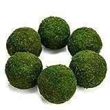 """Farmoo Moss Balls Preserved All Natural, 3.5""""-Set of 6 (Natural Green)"""