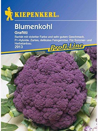 Blumenkohl Grafitti violett