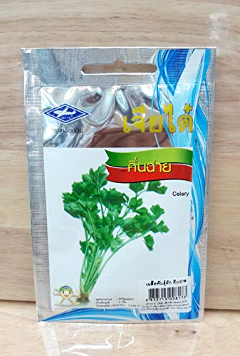 3 g, 7500 Samen 1 Beutel Sellerie Thai Gemüsesamen Pflanze Chia Tai Verwendung Anbau
