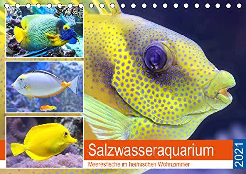 Salzwasseraquarium. Meeresfische im heimischen Wohnzimmer (Tischkalender 2021 DIN A5 quer)