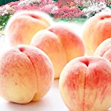 国華園 桃 和歌山産 紀州白鳳・白桃 約2㎏ 1箱 食品