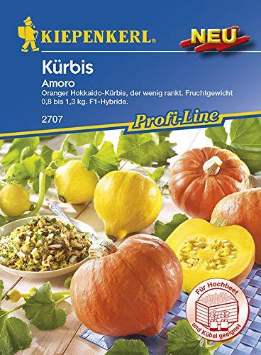 Kiepenkerl Kürbis 'Amoro' | auch fürs Hochbeet geeignet | gelbe Sorte | 1 Päckchen Samen