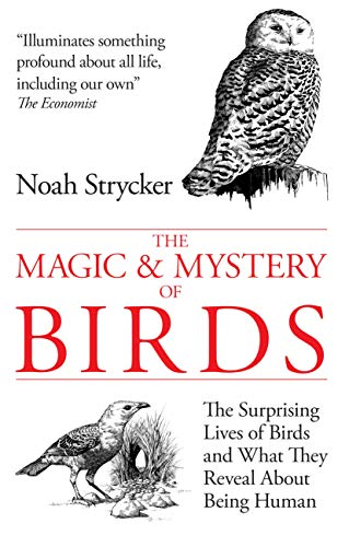 The Magic & Mystery of Birds: The Surprising Lives of Birds and What They Reveal About Being Human (English Edition)