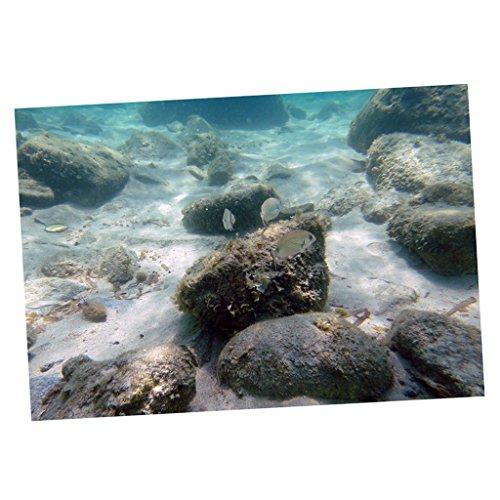 non-brand Fondo de Acuario Fácil de Aplicar y Quitar Fondo de Tanque de Peces con Imágenes en 3D HD, Static Fish Aquarium - Estilo 18, L