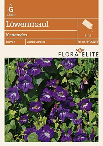 Löwenmaul Kletterndes von Flora Elite [MHD 06/2019]