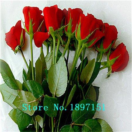 Le bleu graines arc Big vente rose Bonsai plantes Semences pour la maison et le jardin Livraison gratuite