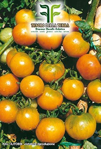 700 c.ca zaden tomaat ponderosa sel - goud - lycopersicum esculenthum in originele verpakking gemaakt in italië - ponderosi tomaten