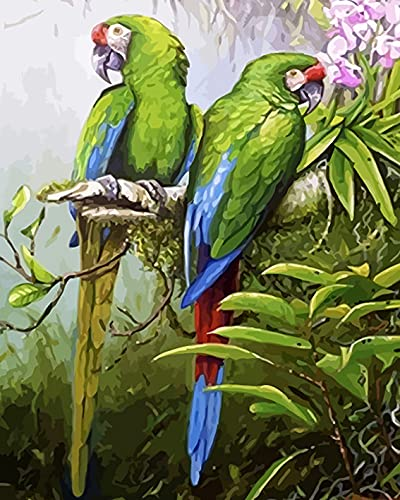 Vfvozr Kit de Pintura por números para Pequeña Ave Adultos Paisaje DIY Pintura al óleo por número Regalos de cumpleaños para Adultos Niños Pintura 40x50cm Sin Marco