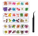 KAHEIGN 96 Piezas Flor Secada de Uñas, Flor Secada Real Del Arte Del Clavo 3D Apliques de Uñas Piezas de Uñas Decoración de Arte de Uñas de Manicura de Flores Preservadas - con Pinzas