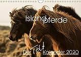Islandpferde - Der Tölt Kalender (Wandkalender 2020 DIN A4 quer): Dieser Kalender ist speziell für Islandpferdeliebhaber gemacht und zeigt die Pferde ... (Monatskalender, 14 Seiten ) (CALVENDO Tiere)
