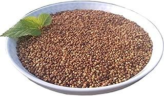 Wild Chinese Dodder Seed, TuSiZi(250g Chinese Herb)