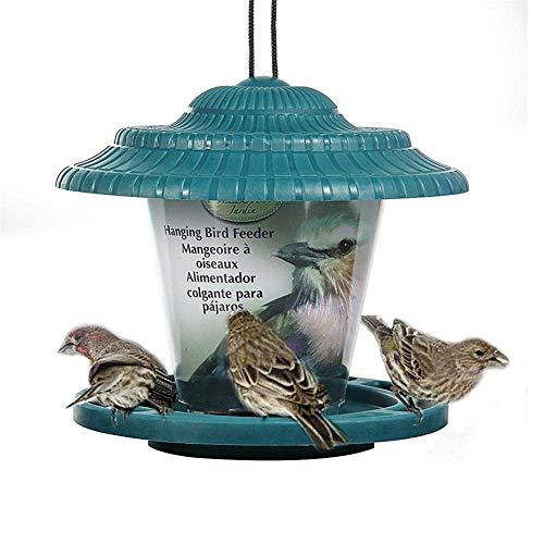 Vogel Feeder Vogel Feeders Voor Kleine Vogels Kleine Vogel Feeder Vogel Moer Feeder Robin Vogel Feeder Meelworm Feeder green