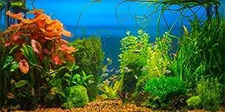 Best aquarium backdrop ideas Reviews