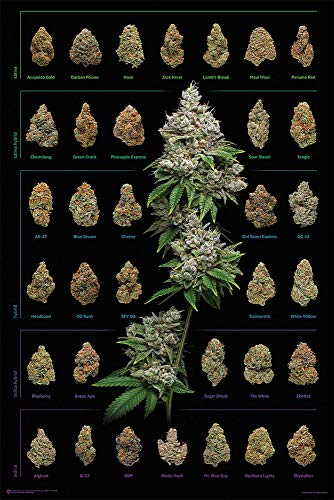 Close Up Cannabis Poster Dank Nugs Marihuana-Sorten (61cm x 91,5cm) + Ü-Poster