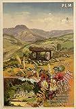 Saint Nectaire Auvergne Poster, Reproduktion, Format 50 x