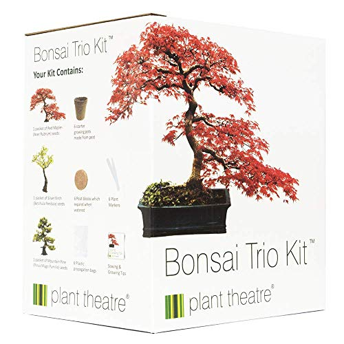 Plant Theatre - Bonsai Trio, Kit per la...