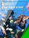 Umbria - From Wreck to Reef