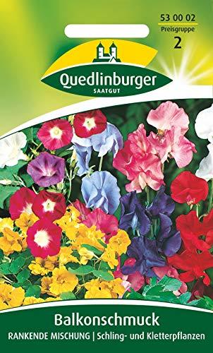 Balkonschmuck, Mischung, rankend, Samen für ca. 3 qm.