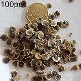 cplapli 100 / 200pcs fiori semi semi di gerbera pianta da giardino ornamentale facile da coltivare semi di margherita 100pcs