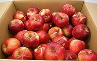 りんご 青森県産 葉取らず紅玉 11kg (1箱)