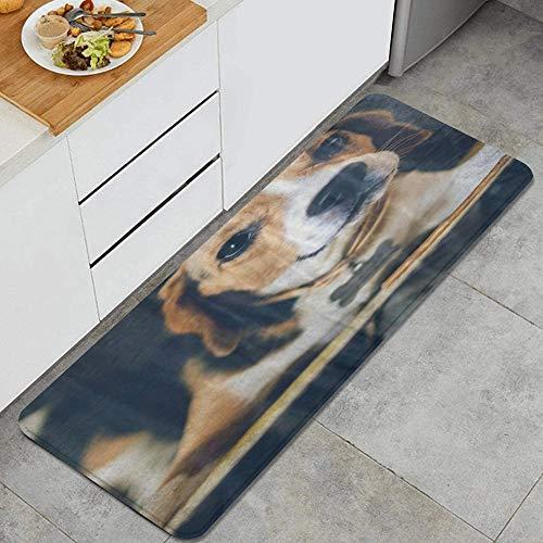 VINISATH Tappeti Cucina Antiscivolo Tappeti per Cucina Lavabile Tappetino Bagno Zerbino Tappeto Cucina Passatoia,Fronte del primo piano del cane del cucciolo di Beagle