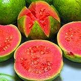 30 PC / bolso de guayaba Semillas de deliciosas frutas tropicales en macetas de plantas no transgénicas bonsai árbol frutal para la planta de jardín de la casa 2