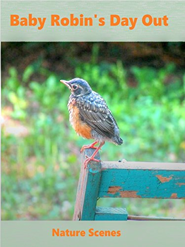 Baby Robin's Day Out