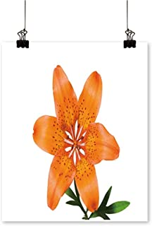 On Canvas Prints a The Flower Lily Lilium pensylv icum Isolate on White Paintings for Wall Decor,12