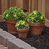 The Lakeside Collection Solar Half-Ball Lighted Ground Plants - Light Up Green Shrubs - Set of 3