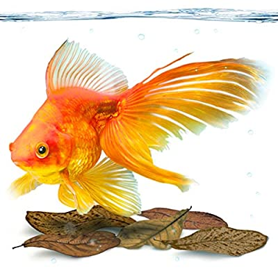 SunGrow Mini Goldfish Indian Almond Leaves, 2 Inches, Food Supplement, Improves Fish Health and Breeding, Create Tea Water Environment for Pets, Lower pH, 50 Pack