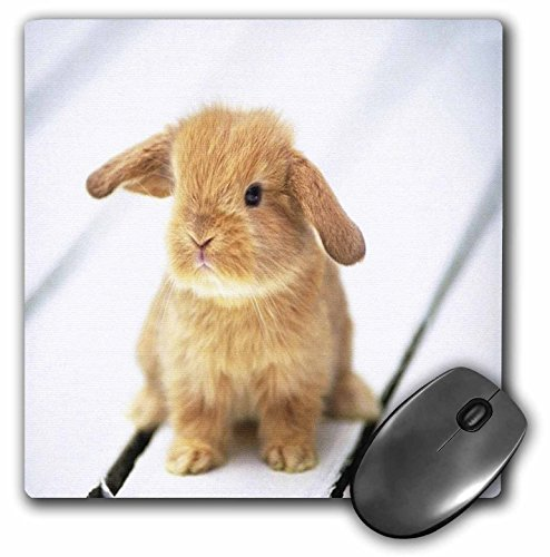 3dRose LLC 8 x 8 x 0.25 Inches Mouse Pad, Adorable Barbara Bunny Rabbit (mp_55173_1)