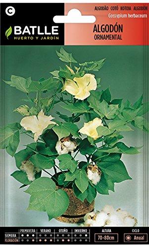 Semillas de Flores - Algodón ornamental - Batlle