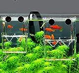 NKTJFUR Mini Caja de Aislamiento de cría de Peces Caja de Pescado Caja de criadores de Acuario Betes Betta Betta Fish Incubadora Incubadora Acuario Fish Bowl