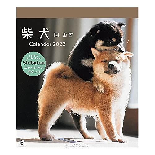 2022年 仔犬/柴犬カレンダー(関由香)30角 1000120059 vol.016