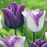 luo-401xx 100pcs bulbi di tulipani semi di fiori, facile da coltivare, bella pianta da balcone bonsai multicolore per la decorazione dell'ufficio del cortile di casa tipo 4 semi di tulipano