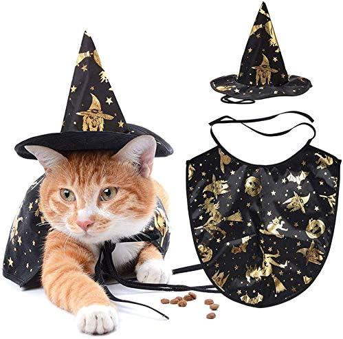 Accesorios para gatos _image1