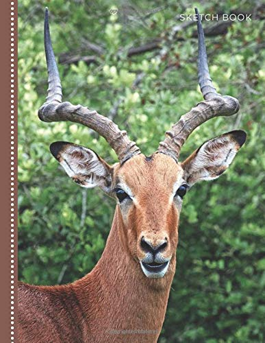 Sketch Book: Unlined Art Notebook for Kids, Teens, and Adults for Drawing, Doodling and Coloring | 108 Blank Pages, 8.5x11 : Cute Impala Ram Photo