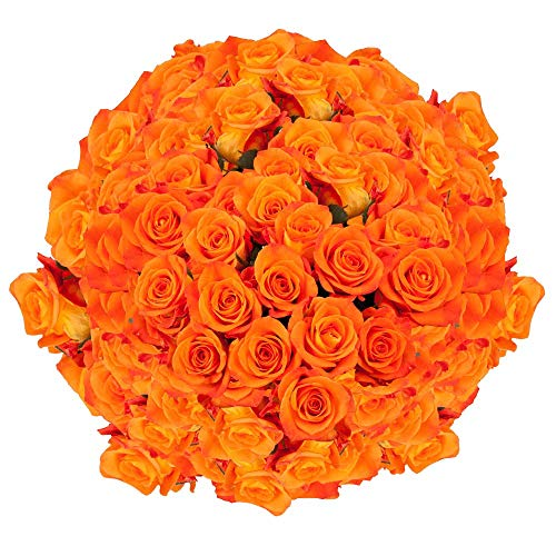 Orange Miracle Roses 100