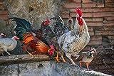 Rompecabezas para adultos, aves de corral, gallina, perdiz, animales, juegos de rompecabezas de plumaje para la familia, rompecabezas de desafío para niños, niños-1000 piezas