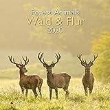 Wald & Flur 2020 A&I - Broschürenkalender - 30x30cm - Wandkalender