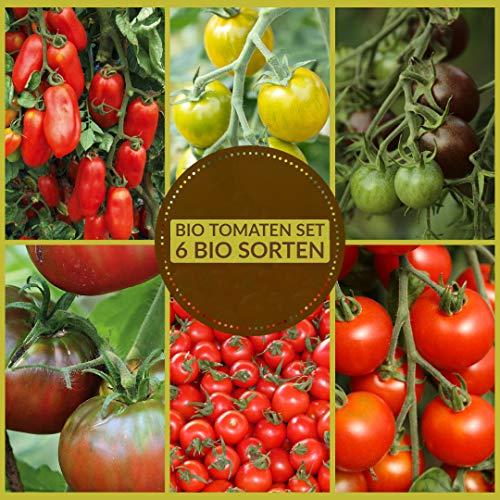 Samenliebe Tomaten Samen Set 6 Sorten BIO Tomatensamen für Deinen Garten & Balkon - rote, schwarze, grüne, russische, süße & alte Sorten als 6er Tomatenset