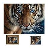 3d livelife stampe d'arte lenticolari da parete - occhi blu di deluxebase. poster 3d tigre senza cornice. ottima decorazione da muro. grafica originale realizzata dal rinomato artista steve sundram