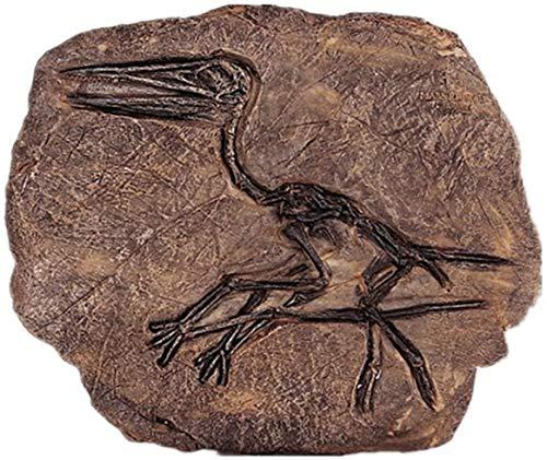 ZHENAO Dinosaurio Fossil Resina Artesanía para Decoraciones de Sala de Estar, Adornos de Colgante de Pared Creativa Decoración de la Personalidad Decoración Exquisito