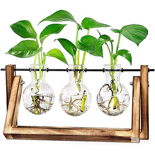 Hydroponik Vase Hängevase - OLT-EU Deko Holz Halter mit Hydroponik Glasvase Desktop Plant Terrarium Kreative Glas Transparente Vase für Hydrokultur Pflanzen, Zuhause oder Büro Dekoration (3 Vasen)