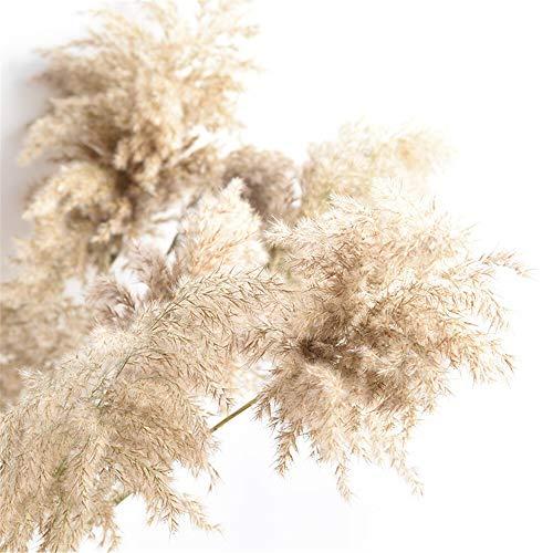 KDHJY Gute Qualität 15 Stück Hochzeitsdekoration getrocknete Pflanzen Rohe Farbe Chinesisches Schilf Pampas Gras natürliche Phragmites Communis Blumenstrauß kunstblumen