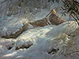 Becadas Lámina sobre lienzo.Chocha Perdiz (Scolopax rusticola) 35 x 26 cms. Cuadros de animales, aves, pájaros