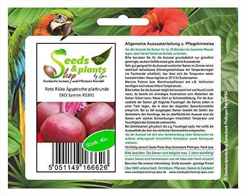 Stk - 40x Rote Rübe Ägyptische plattrunde EKO - Rübensamen Gemüse Garten KS391 - Seeds Plants Shop Samenbank Pfullingen Patrik Ipsa